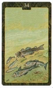 Значение 34 карты РЫБЫ из Оракула Ленорман (из книги Маркуса Кац и Тали Гудвин)