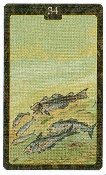 Значение карты ленорман рыбы